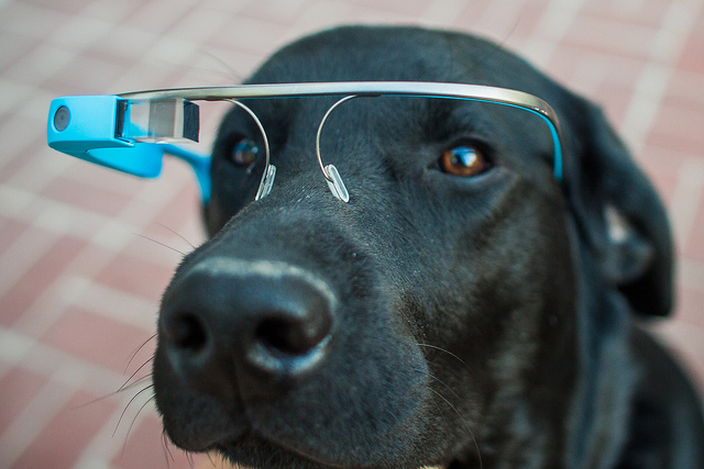 perro google glasses gamificacion